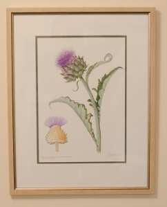 Cynara Cardunculus & Cross Section (Framed)