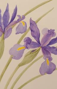 Dutch Iris (3)