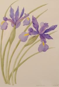 Dutch Iris (Unframed)